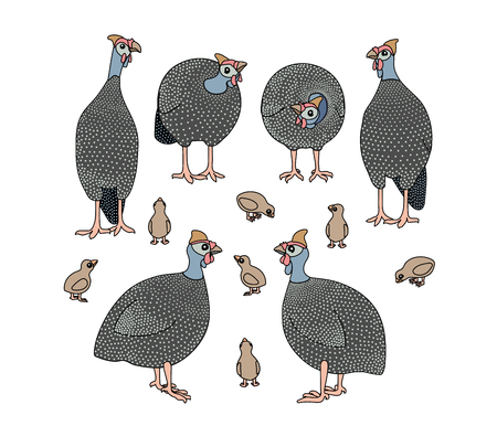 vector scandi cartoon animal clip art guineafowl birds Illustration