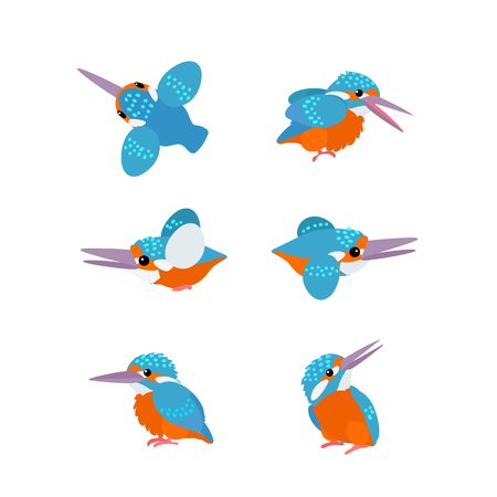 vector flat cartoon animal clip art kingfisher birds set