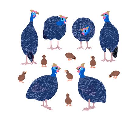 vecteur, plat, dessin animé, animal, clip art, pintade, oiseaux Vecteurs