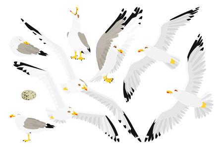 vector flat cartoon animal clip art seagull sea gull set