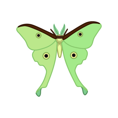 vector cute cartoon insect clip art butterfly Luna moth