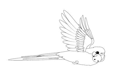 vector cartoon animal clip art flying budgerigar