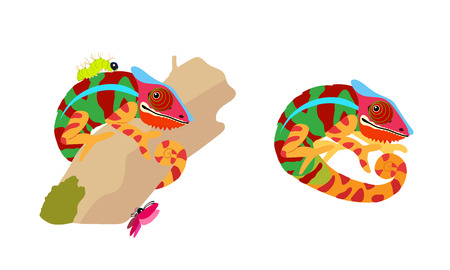 vector cartoon animal clipart funny chameleon set