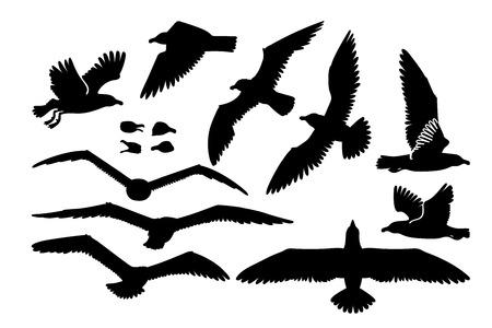 vector cartoon seagull sea gull cliparts set