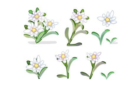 vector cartoon plants nature clip art. edelweiss flowers Vector Illustration