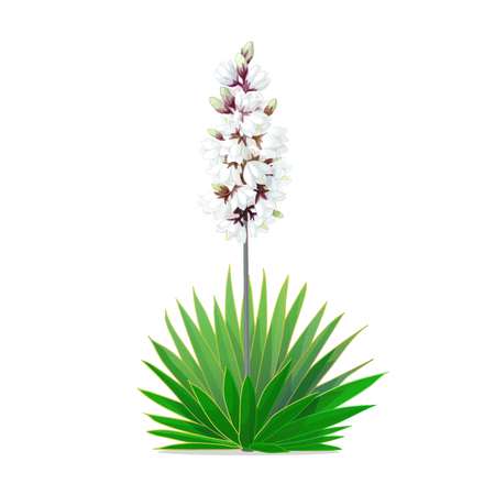 vector cartoon plants nature clip art. blooming yucca