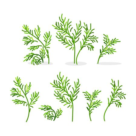 vector cartoon plants nature clip art. fennel dill greenery Ilustração