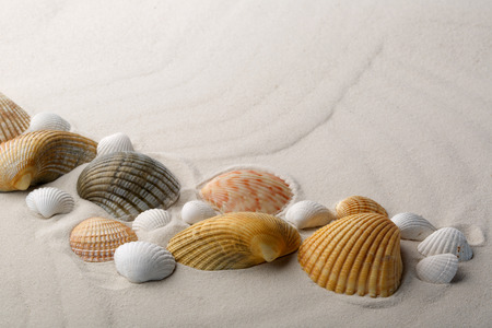 Sea shells on sand  Summer beach background  Stock Photo