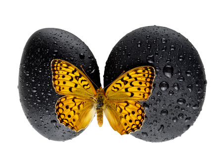 butterfly stationary: Zen stone with butterfly