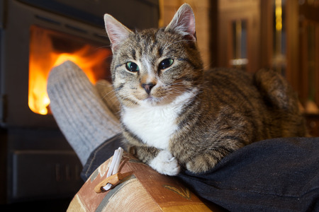 stockings feet: feet in stockings with cat by the fireplace