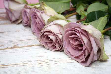 purple roses: purple roses  on wooden background