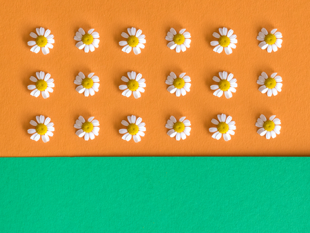 margarite: background with daisy flowers onorage and green background. Flat lay. Top vew