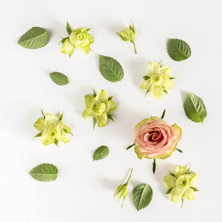 Roses and leaves on white background. Flat lay, top view