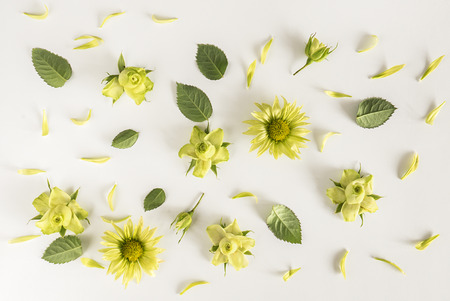 Roses, green flowers and leaves on white background. Flat lay, top view Stock Photo