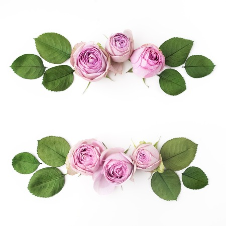 purple roses: Purple roses on white background. Flat lay. Stock Photo