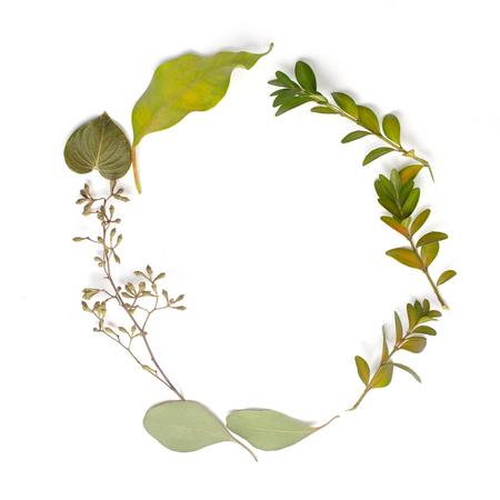 Cadre de cercle rond composé de branches vertes et de feuilles sur fond blanc. Mise à plat, vue de dessus