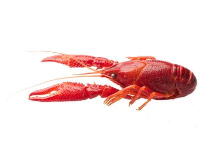 Gotowane czerwone raki na białym tle