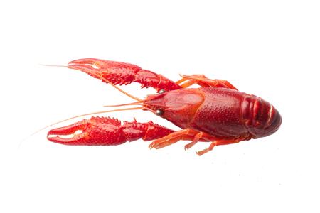 Boiled red crawfish isolated on white background Imagens