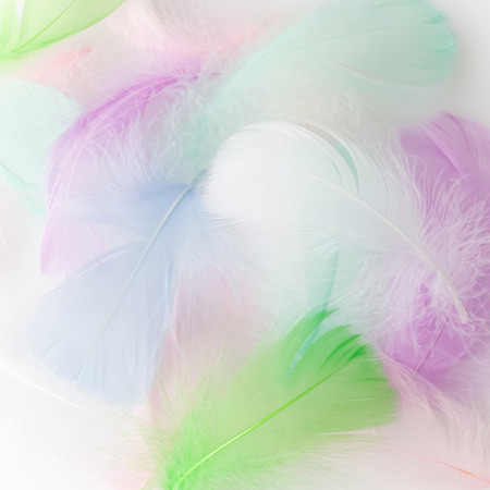 Abstract feather rainbow patchwork background. Closeup image. Fashion Color Trends. Stock Photo