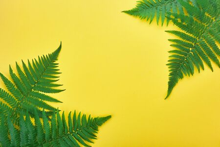 Border of fern leaves on yellow. Top view with copy space. midsummer background