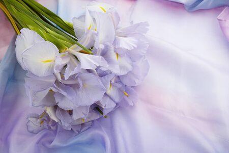 春天的自然背景与美丽的鸢尾花