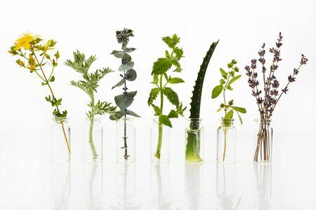 Bottiglia di olio essenziale con erbe su sfondo bianco