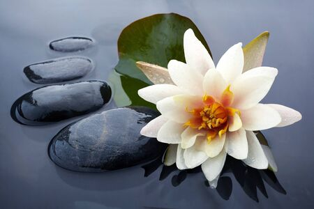 Spa still life with water lily and zen stone in a serenity pool Stock Photo
