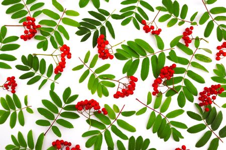 Rowan berries on white background. Autumn concept. Flat lay, top view, copy space
