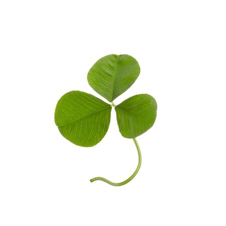 Green clover leaf isolated on white background. Foto de archivo - 130228611