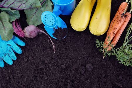 Garden tools with vegetables on soil background. Gardening concept