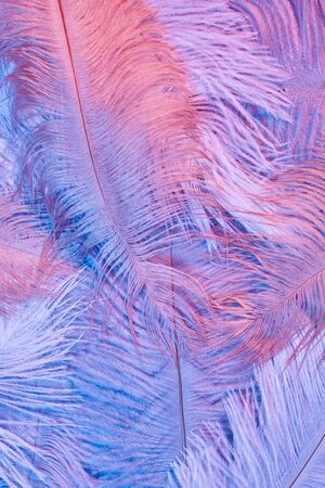 Neon glowing feathers of a bird background. Flat lay.