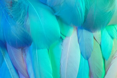 Neon glowing feathers of a bird background.