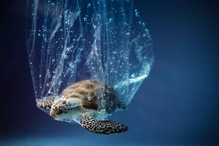 Turtle in plastic bag in ocean. world oceans day concept. Environment concept. Ecology concept. Earth planet. Sea underwater background. Save planet.