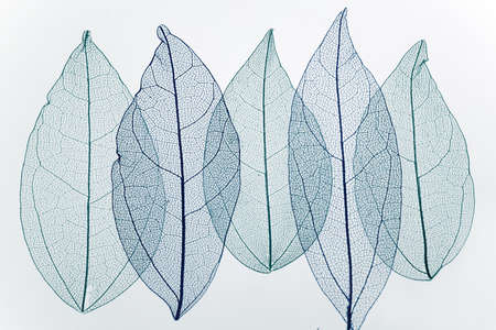 Transpatrent leaves arstract background. Top view, flat lay. Banque d'images