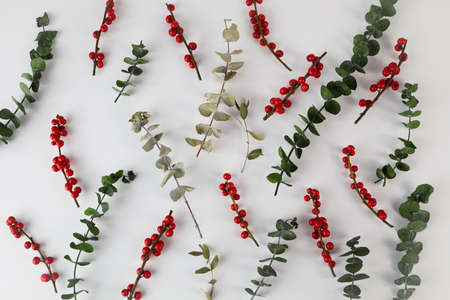 Floral pattern on white paper. Dry eucalyptus with red berries. Flat lay. Top view