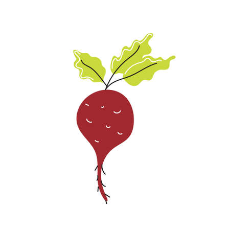 Fresh beetroot on a white background. Vector flat image, icon.