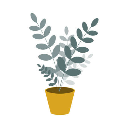 Potted indoor flower, zamioculcas on a white background. Vector illustration in a flat style.