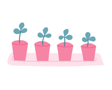 Seedlings, plants in pink pots on a pallet, white background. Vector illustration in a flat style.