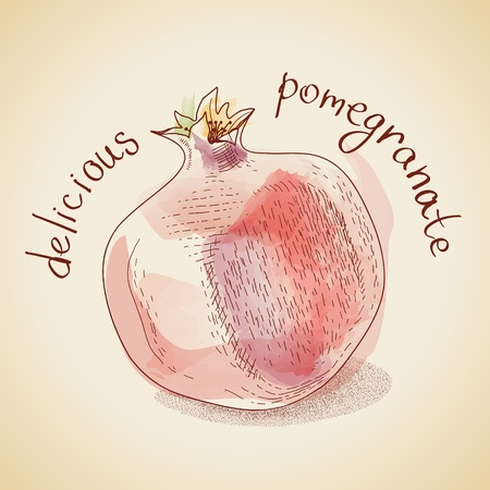 Vector illustration depicting a pomegranate, in vintage style with simulated watercolors