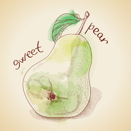 Vector illustration of vintage pear, painted in watercolor
