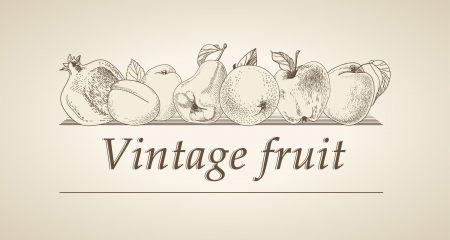 Vector vintage banner with a picture of fruit Stock Vector - 13605753