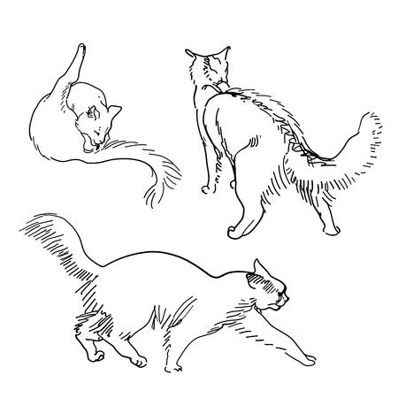 Set of  sketch cats Vector