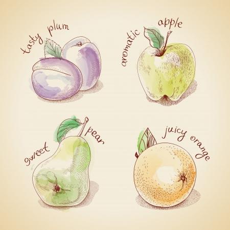 yellow apple: Vector set of vintage fruit
