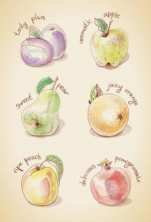 aerate: Vintage set di frutti diversi, acquerello stilizzato