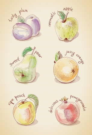 flavorful: Vintage set of different fruits, stylized watercolor Illustration