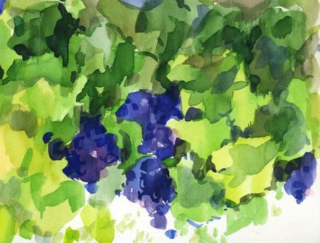 isabella: Watercolor illustration of black grape of foliage
