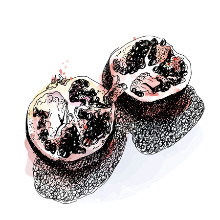 sloppy: Sloppy sketch pomegranate ink and watercolor