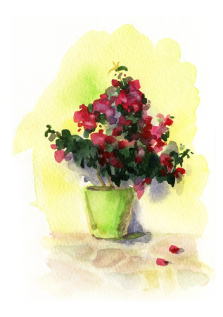 oleander: Watercolor image of a flower pot at the wall