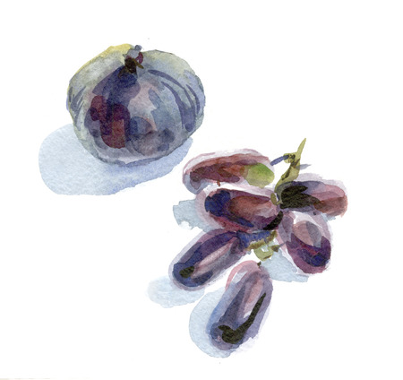 Watercolor still life with figs and black grapes