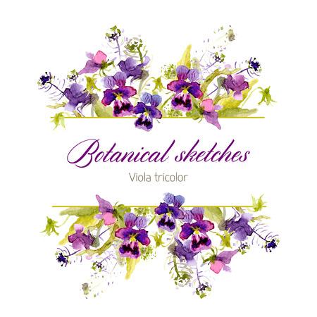 Botanical sketch. Vector watercolor. Screensaver of pansies
